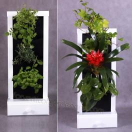 Small vertical garden,  herbarium